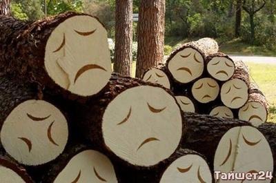 Виктора Логвинова арестовали на два месяца за незаконную рубку леса
