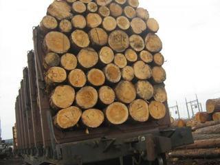 В Тайшете направлено в суд уголовное дело в отношении руководителя предприятия за взятку и причинение ущерба незаконной рубкой леса