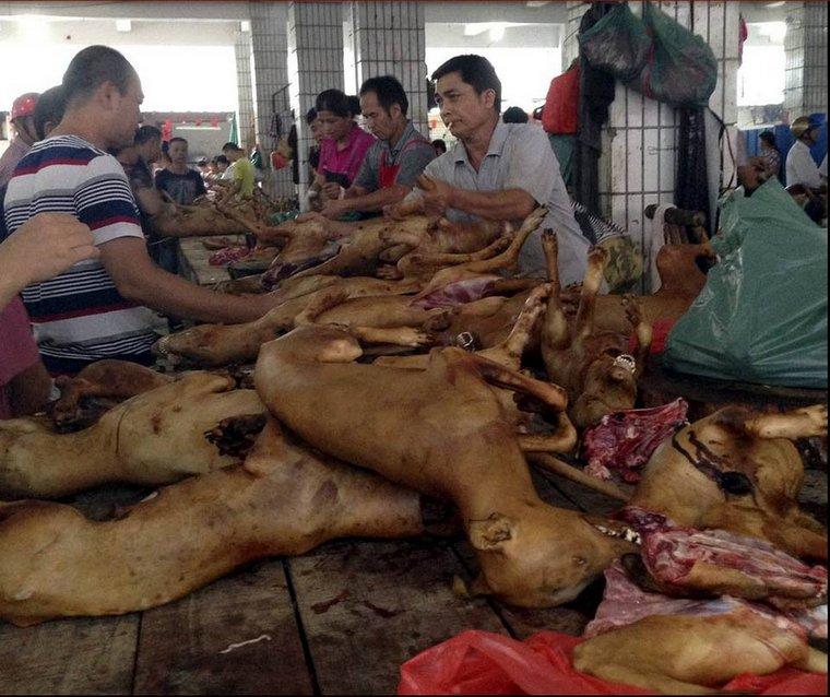 В Иркутске начали продавать собачье мясо