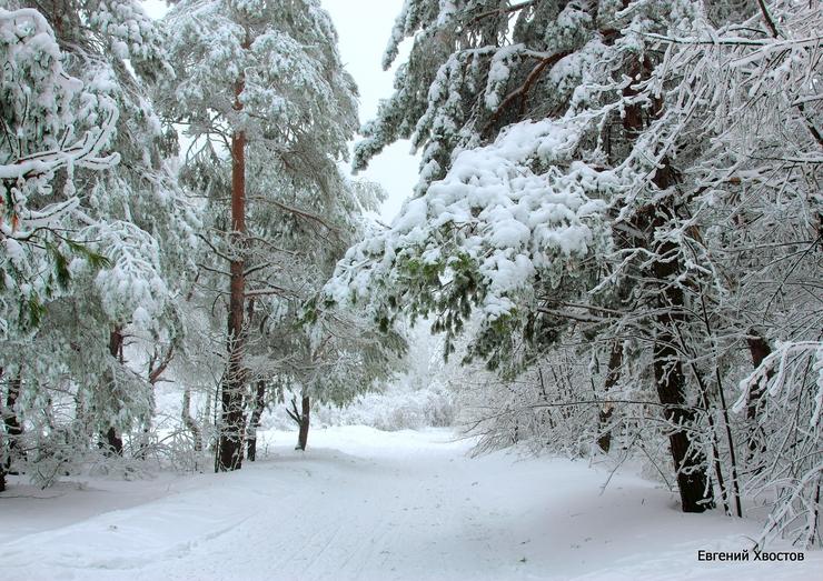Пенсионер замёрз насмерть, пытаясь пешком пройти семь километров через лес в Братском районе