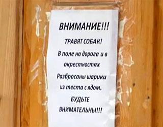 В Иркутске активизировались догхантеры