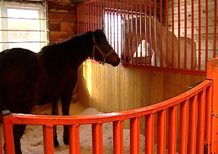 Кто коня потерял? По центральным улицам Иркутска несколько дней разгуливал «ничей» жеребец