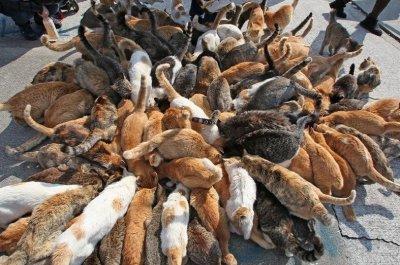 В Красноярске 60 кошек остались без хозяйки