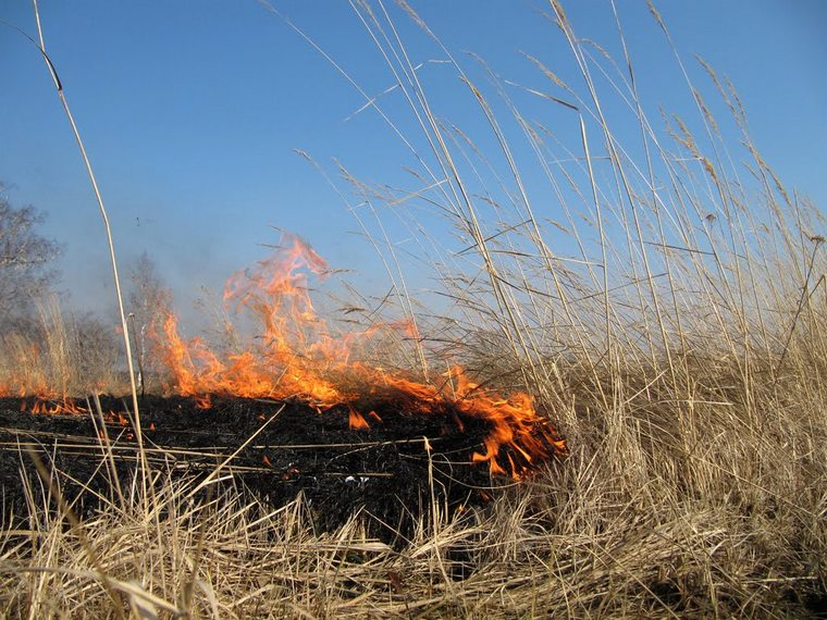 Деревню Талая в Тайшетском районе от трагедии пожарные спасли вместе с сельчанами