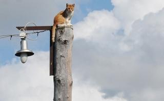 В Тайшетском районе около 3000 человек 1 мая сидели без электричества
