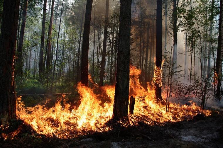 Нам пишут. Тайшетские пожарные мирно наблюдали, как люди борются с огнём