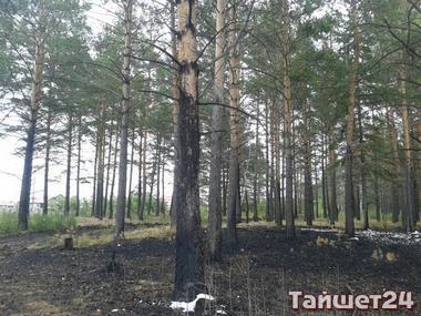Чрезвычайно пожароопасны 26 и 27 мая будут леса Чунского, Жигаловского и Тайшетского районов