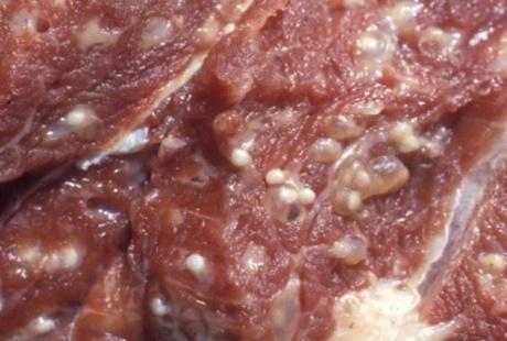 18 человек в Иркутской области отравились мясом медведя