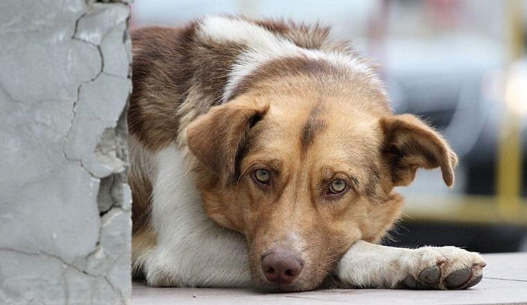 В Тайшетском районе на отлов 110 бродячих собак и кошек потратят 442 тысячи рублей