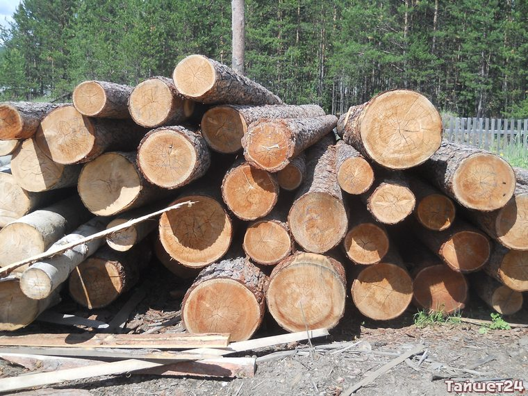 В Тайшетском районе выкосят ещё 285 га леса