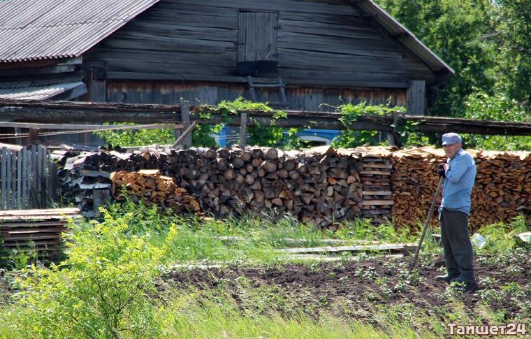 Жители Тайшетского района могут за символическую плату заготовить дрова