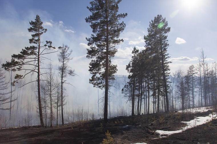 """Зампредседателя правительства Иркутской области Виктор Кондрашов: """"Тушить лесные пожары в отдалённых районах нецелесообразно"""""""