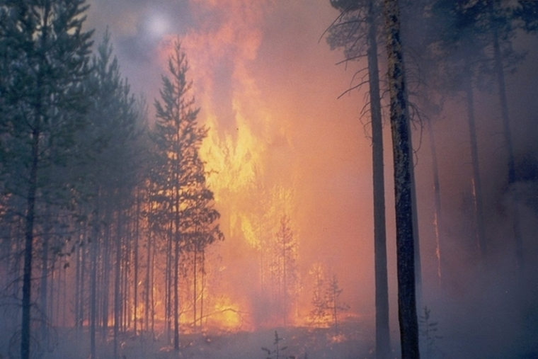 Тайшетский район снова в огне, а в Красноярском крае – лесопожарная катастрофа