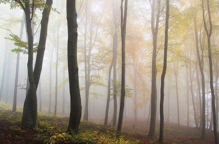 В Нижнеудинском районе взяты под стражу обвиняемые в незаконной рубке леса