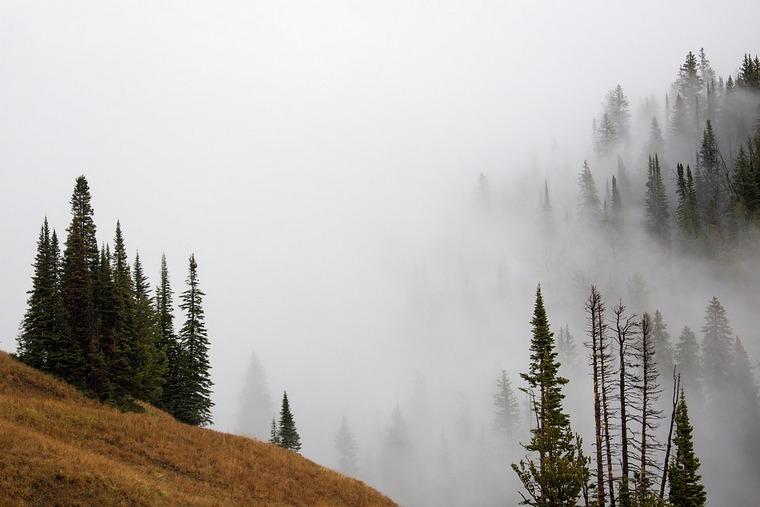 fog-1618690_960_720