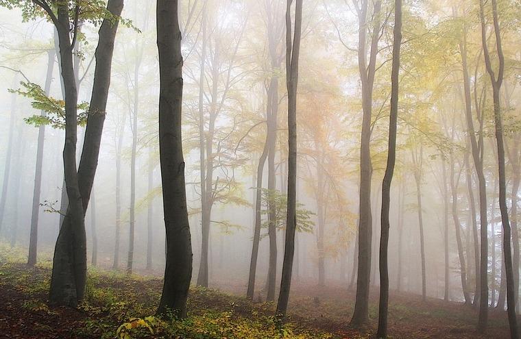 В Тайшетском районе арестованы организаторы незаконных рубок леса