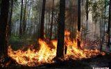 Защитим леса Тайшета за 327 тысяч рублей