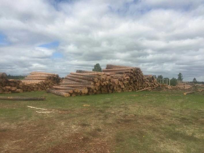 ВТайшетском районе полицейские задержали рабочего лесхоза за нелегальную рубку леса