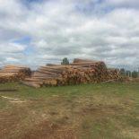 Тайшетский лесхоз наворовал леса на полтора миллиона