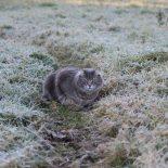В Иркутской области в ночь на 8 июня обещают заморозки