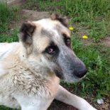 На отлов 161 бездомной собаки администрация Тайшетского района потратит около 400 000 рублей