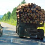 В Тайшете на смешные суммы оштрафовали лесоэкспортёров