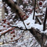 Снег ожидается в Тайшете на выходных