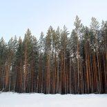 Депутат Думы в Нижнеудинском районе подозревается в незаконной порубке леса