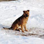 В Тайшетском районе не стали отлавливать бродячих собак