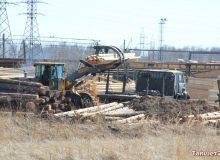 Тайшетские лесники незаконно захватили землю в городе