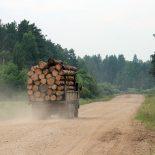 Прокуратура информирует. Об уголовной ответственности за незаконную рубку лесных насаждений