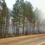 Левченко-2015: «В лесных пожарах виновата действующая власть»