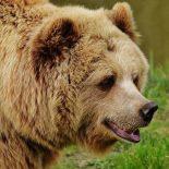 В Красноярском крае медведь задрал ребенка