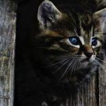 Житель Бирюсинска до смерти замучил котёнка на глазах детей