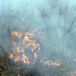 В Тайшетском районе вчера бушевали два лесных пожара