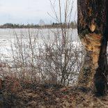 Чтобы заготовить дрова на зиму, тайшетцам придётся пройти семь кругов ада