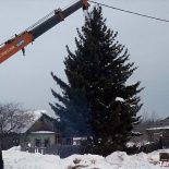 Скандал. В посёлке Юрты чиновники срубили 43-летнюю ель