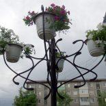 Кража века. Возле тайшетской администрации стащили три горшка с цветами