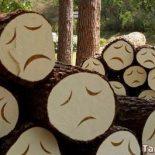 Жалобы на незаконные рубки леса принимают власти Иркутской области на сайте Открытого Правительства