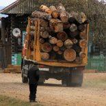 Тайшетский лесозаготовитель заключил фиктивные договоры и обманул государство на 11 миллионов
