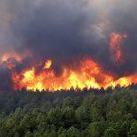 Тайшетский район в огне: полыхает свыше 2000 гектаров леса