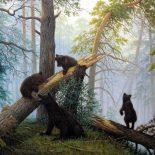 В Тайшетском районе медведи вышли к людям