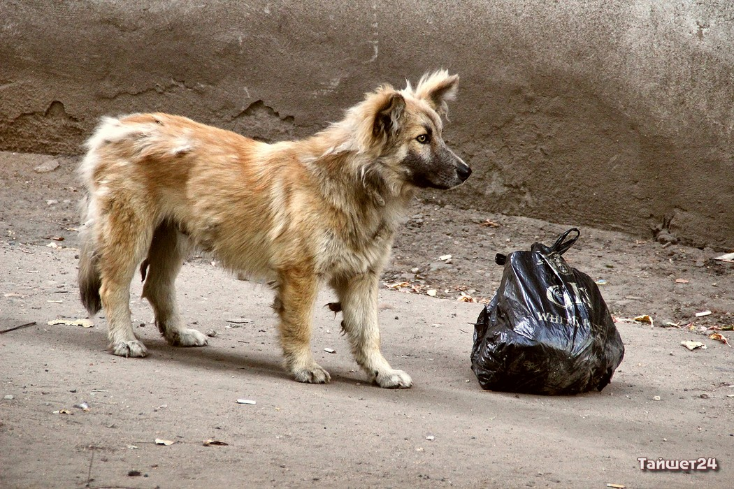 день защиты бездомных животных 2020
